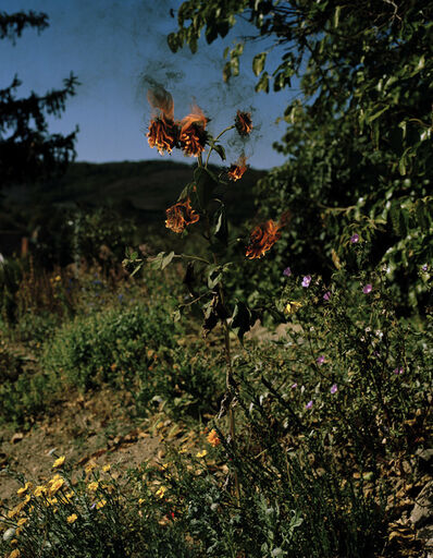 Elspeth Diederix, 'Flameflower', 2009