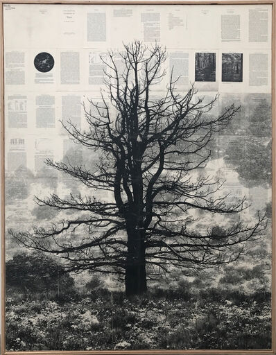 Mike Saijo, 'Jeffery Pine Tree', 2017