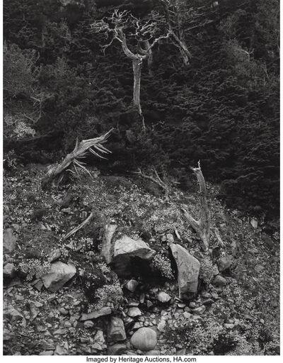 Edward Weston, 'Point Lobos', 1946