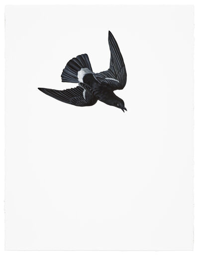 Shelley Reed, 'Wilson's Petrel', 2017