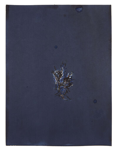 Meghann Riepenhoff, 'For Anna, Vol. II, Plate 27', 2017