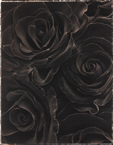 Ron van Dongen, 'Rosa Black Beauty', 1998
