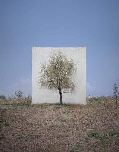 Lee Myoung Ho, 'Tree #7', 2007