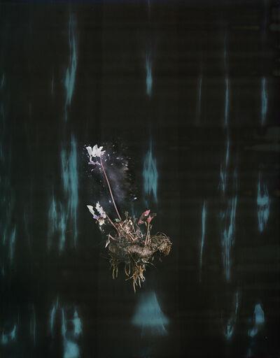 Ori Gersht, 'Black Cyclamen P02', 2018