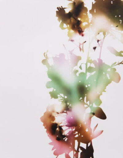 "James Welling, '001, E+B (from ""Flowers"")', 2006"