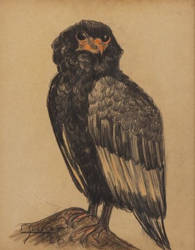 Gaston Suisse, 'Martial eagle'