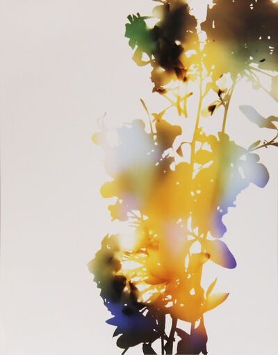 "James Welling, '001, A+7 (from ""Flowers"")', 2006"
