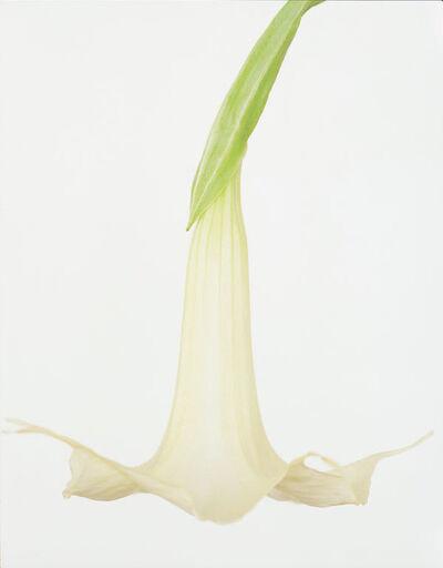 Ron van Dongen, 'Brugmansia x Candida'