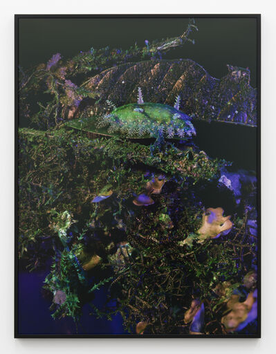 Richard Mosse, 'Parasa indetermina with Aretaon asperrimus', 2019