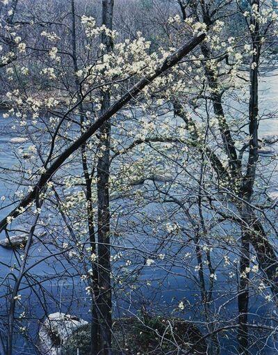 Eliot Porter, 'Shadbush, Near Hillsborough, New Hampshire', 1957