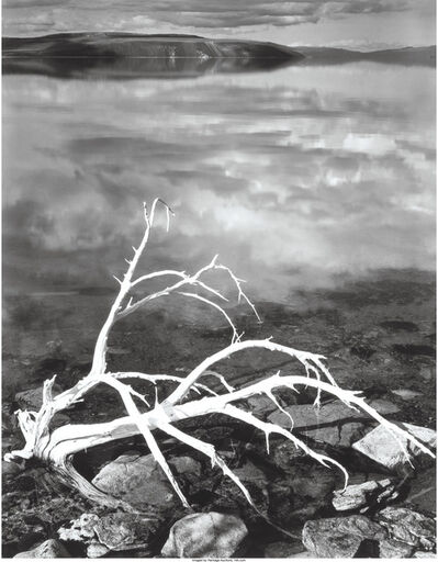 Ansel Adams, 'White Branches, Mono Lake, California', 1950