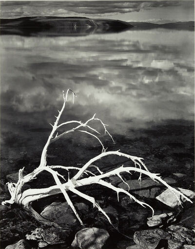 Ansel Adams, 'White Branches, Mono Lake, California', 1950