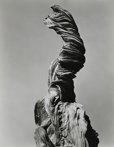 Edward Weston, 'Stump Against Sky, 1936', 1936
