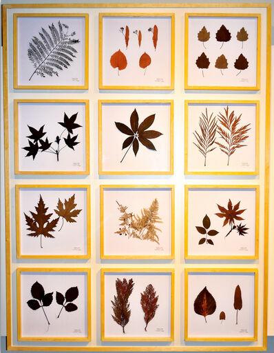 Teresa Cabo, 'La Naturaleza no se Atrapa, Panel I', 2018