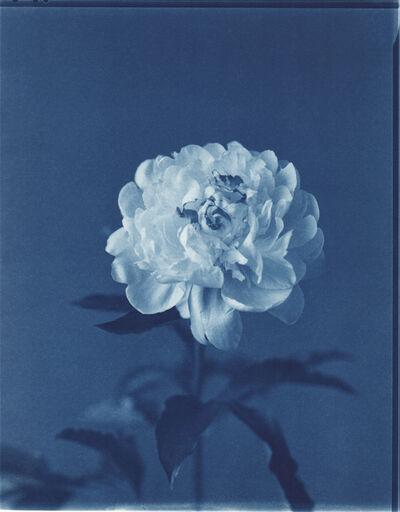 John Dugdale, 'Peonia', 1998
