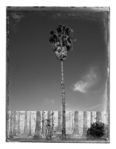 Christopher Thomas, 'Palm Tree', 2017