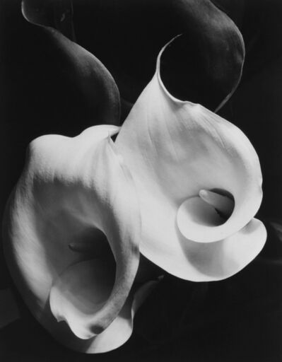 Imogen Cunningham, 'Two Callas', 1925
