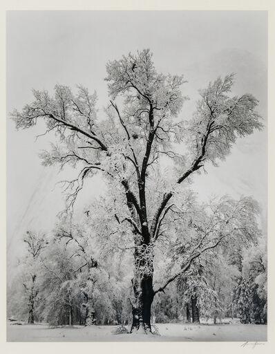 Ansel Adams, 'Oak Tree, Snow Storm, Yosemite Valley', 1948, printed c. 1963, 1970