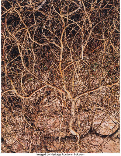 Eliot Porter, 'Untitled (Branches) from Glen Canyon Series', 1961