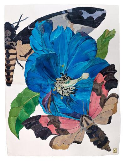 Sarah Graham, 'Meconopsis baileyi IV', 2019