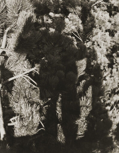 Erwin Blumenfeld, 'Erwin Blumenfeld's Shadow amidst Dutch pines, The Netherlands', 1931