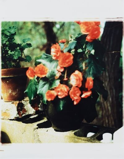Jack Pierson, 'Begonias at outdoor shower', 1995