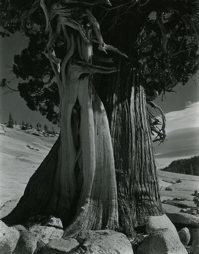 Edward Weston, 'Juniper/Tenaya Lake', 1937