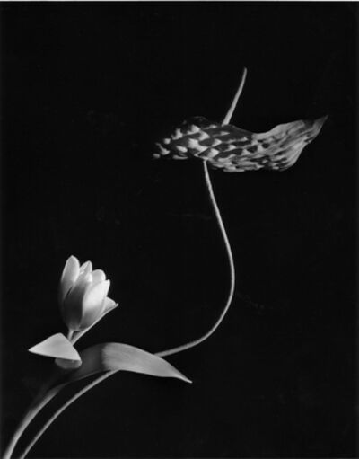 Horst P. Horst, 'Tulip with Anthurium, Oyster Bay, New York', 1989
