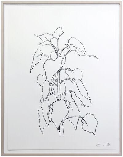 Ellsworth Kelly, 'Sunflower II', 1995-2004