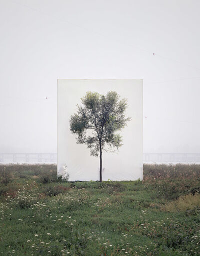 Lee Myoung Ho, 'Tree #6', 2008