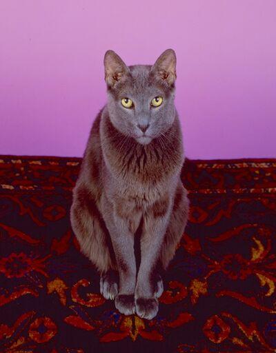 Neil Winokur, 'Zorba', 1990