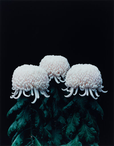 Tomoko Yoneda, 'Chrysanthemums, from the series Cumulus', 2011