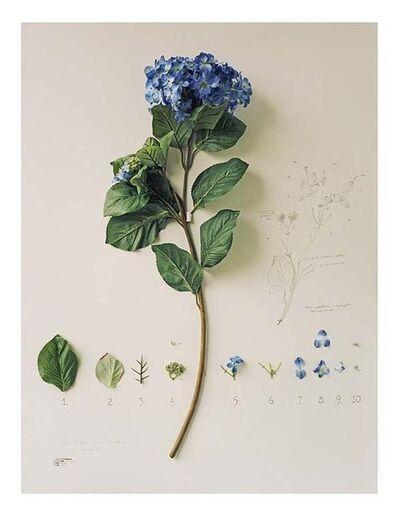 """Alberto Baraya, 'Proyecto """"Herbario de plantas artificiales""""', 2003/2013"""