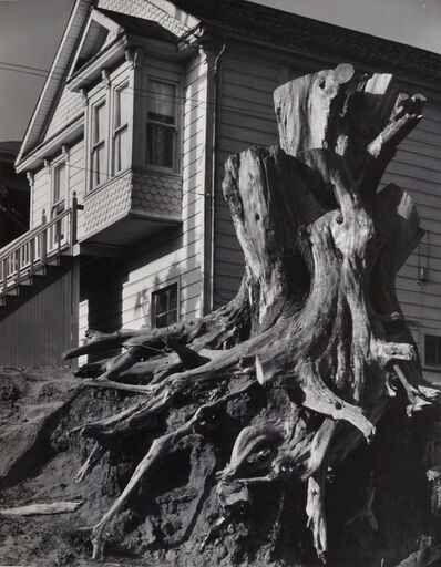 Pirkle Jones, 'Untitled (Tree stump and house)', nd