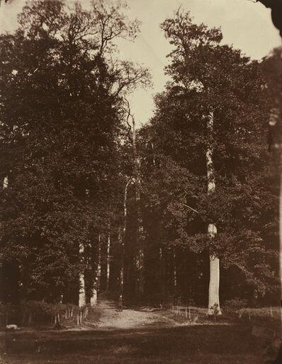 Louis-Rémy Robert, 'Forest at Saint-Cloud', 1859-1860