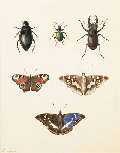 Pancrace Bessa, 'Three beetles and three butterfies: a ground beetle, a Calosoma sycophantis, and a cottonwood stag beetle; a peacock (Inachus io), and a Purple Emperor (Apatura iris, upper and under sides)'