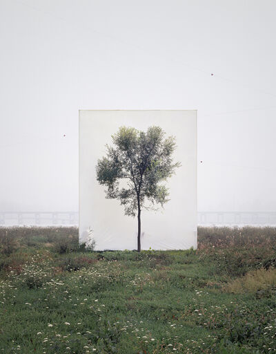 Myoung Ho Lee, 'Tree #6', 2008