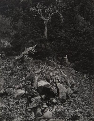 Edward Weston, 'Point Lobos', 1946-printed later