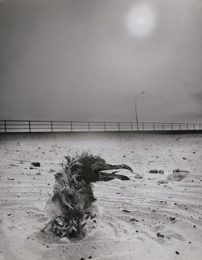 Arthur Tress, 'Dead Bird in the Sand', 1970s/1970s