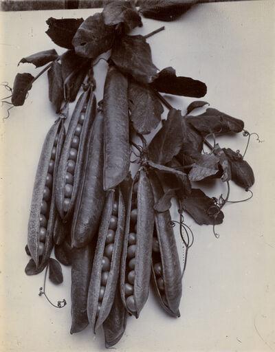 Charles Jones (1866-1959), 'Peas', c.1900