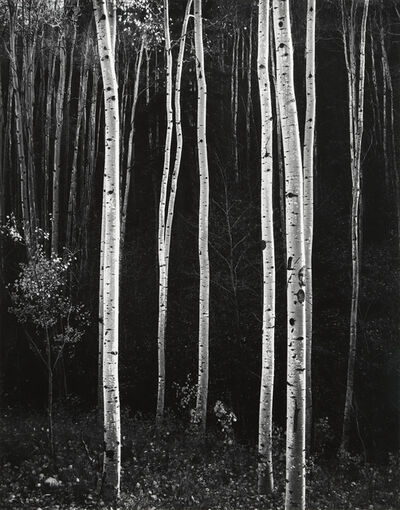 Don Worth, 'Aspens, Autumn, NM, 1958', 1958