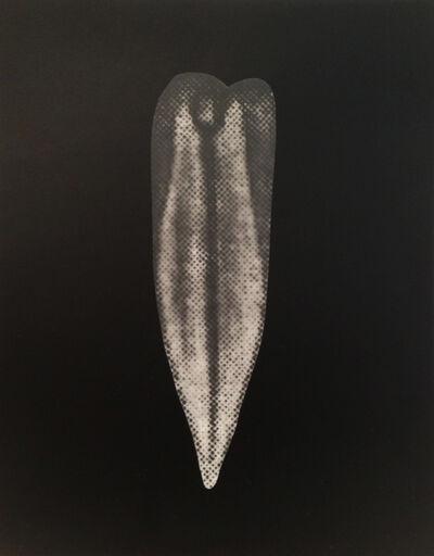 Sophie Nys, 'Vinca II', 2013