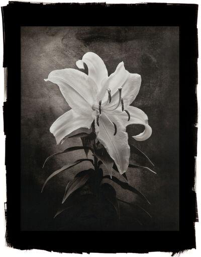 Cy DeCosse, 'Casablanca Lily'