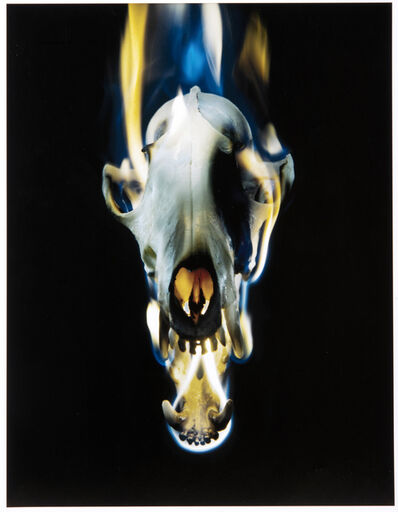 Mat Collishaw, 'Blowback', 2015