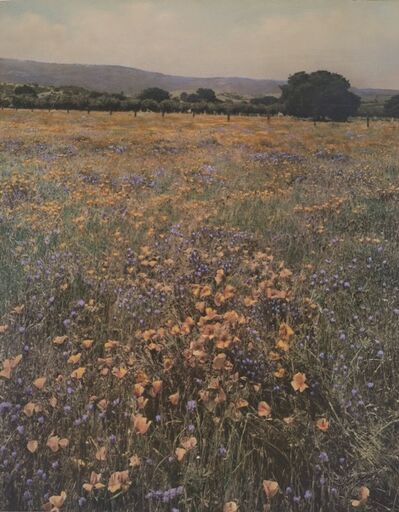 Willard Worden, 'Poppies and Lupine', 1915