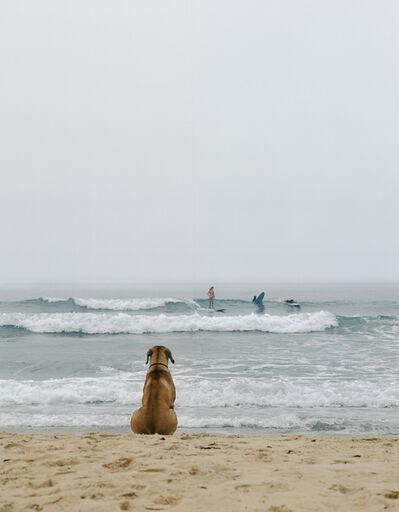 Michael Dweck, 'Beach Dog ', 2002