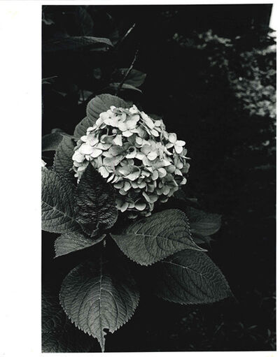 Daido Moriyama, 'How to Create a Beautiful Picture 11, A Woman's Room', 1987