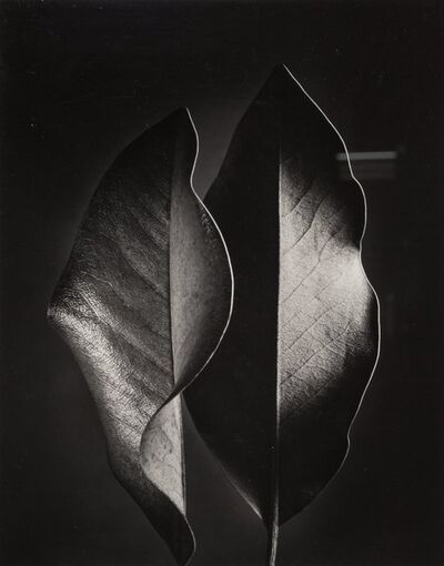 Ruth Bernhard, 'Two Leaves', 1952-printed later
