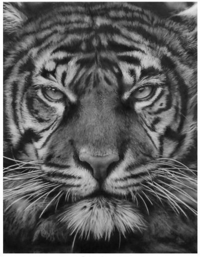 Robert Longo, 'Study for Bob's Tiger', 2014
