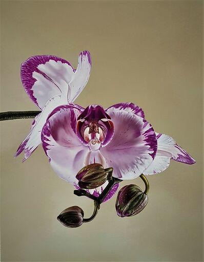 Giovanni Confortini, 'phalaenopsis shih hua smile', 2020